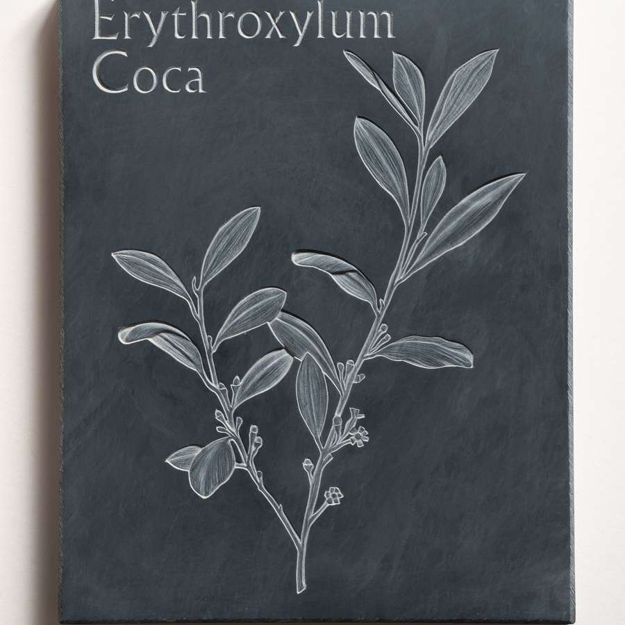Tracy Steel. Erythroxylum Coca - Cocaine.
